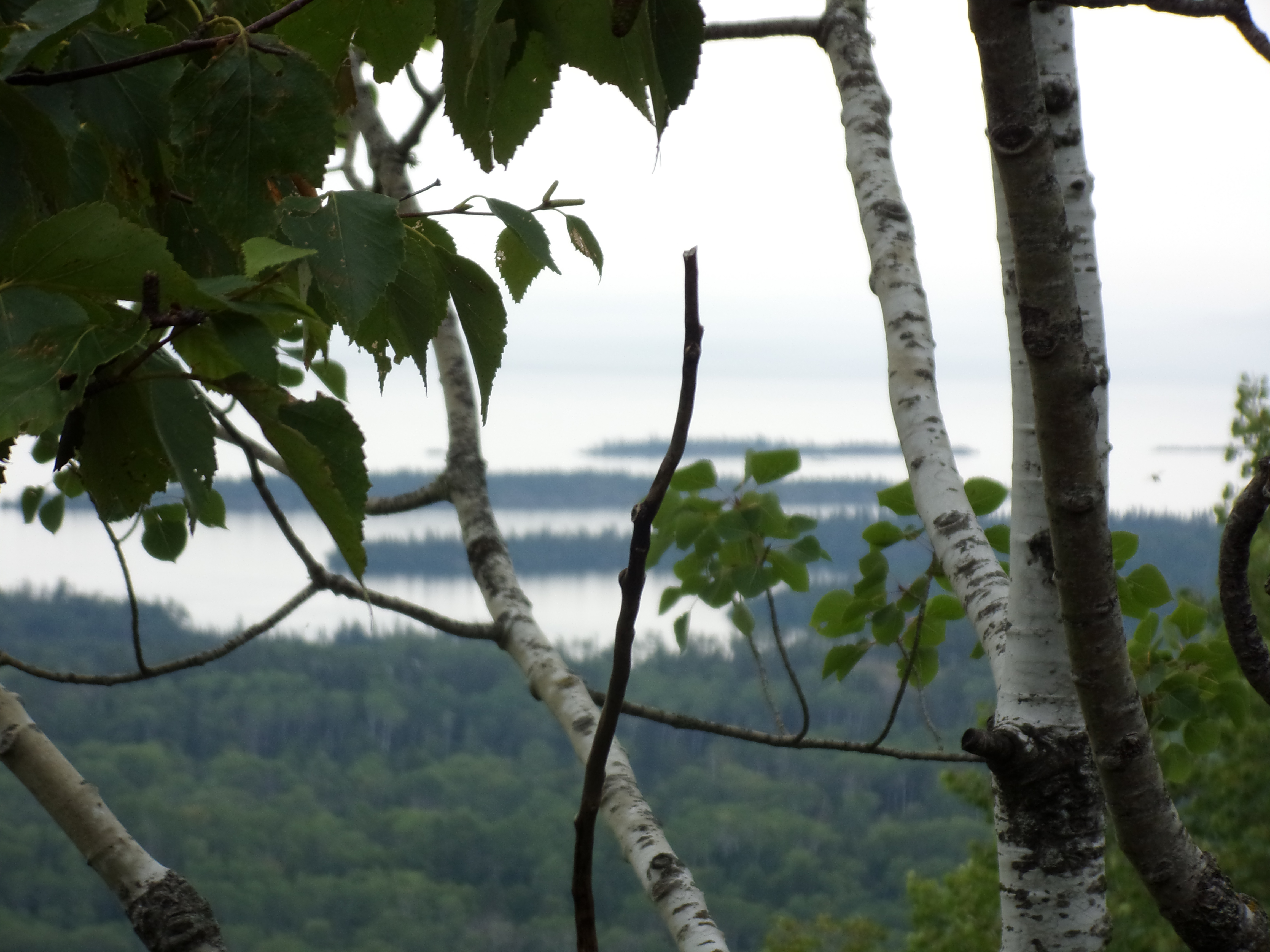 A View from the Greenstone Trail